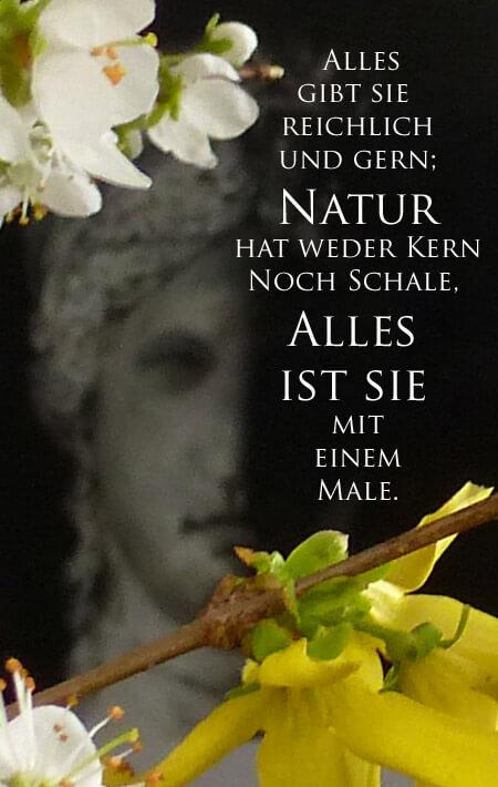 Anna J. Rahn, jalara, Goethe, Frühling, Juno, Natur